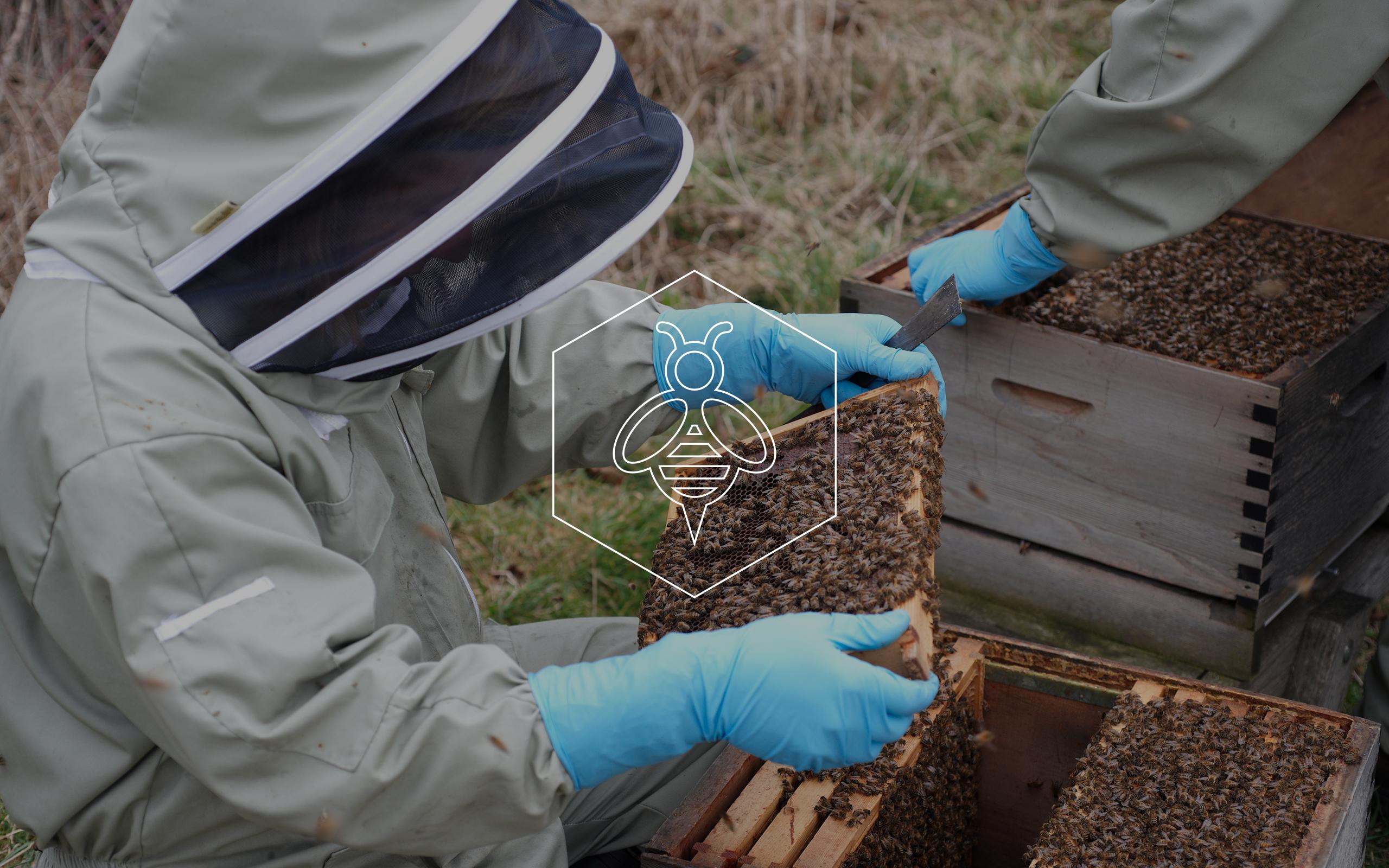 Future Hive Fera